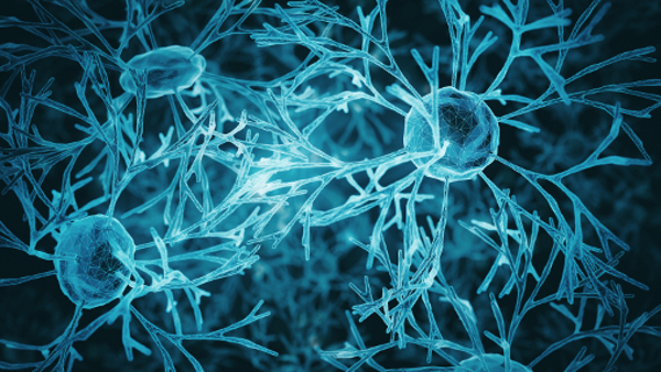 Système de neurones, crédit IStock Koto_Feja, 600x338