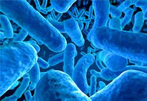 Microbe - bactérie, crédit Istock Spanteldotru, format 316x217