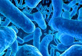 Microbe - bactérie, crédit Istock Spanteldotru, format 600x350